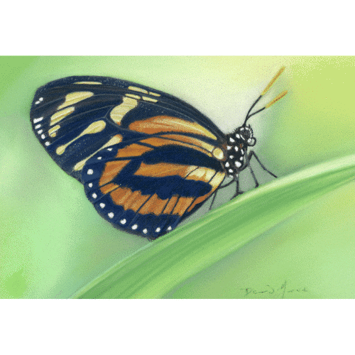 Almost There Harmonia Longwing Pastel Painting
