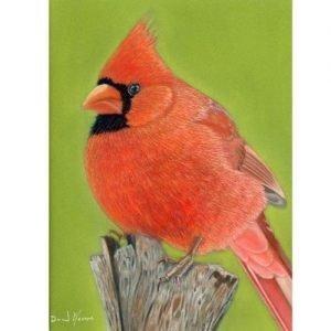 Cardinal Pastel Painting Winters Coming