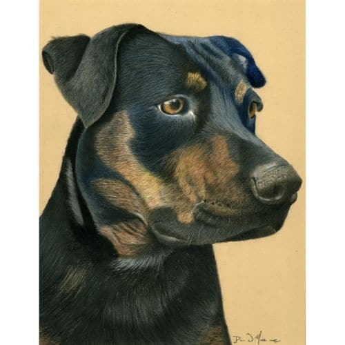 Southern Belle Dog Pastel Painting Fine Art Prints