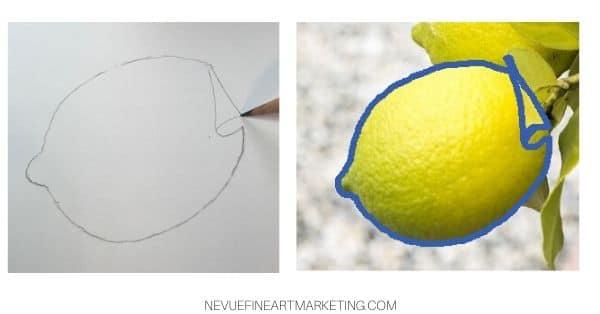 sketch lemon leaf