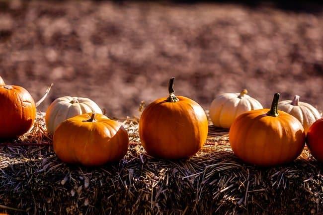 pumpkin reference image